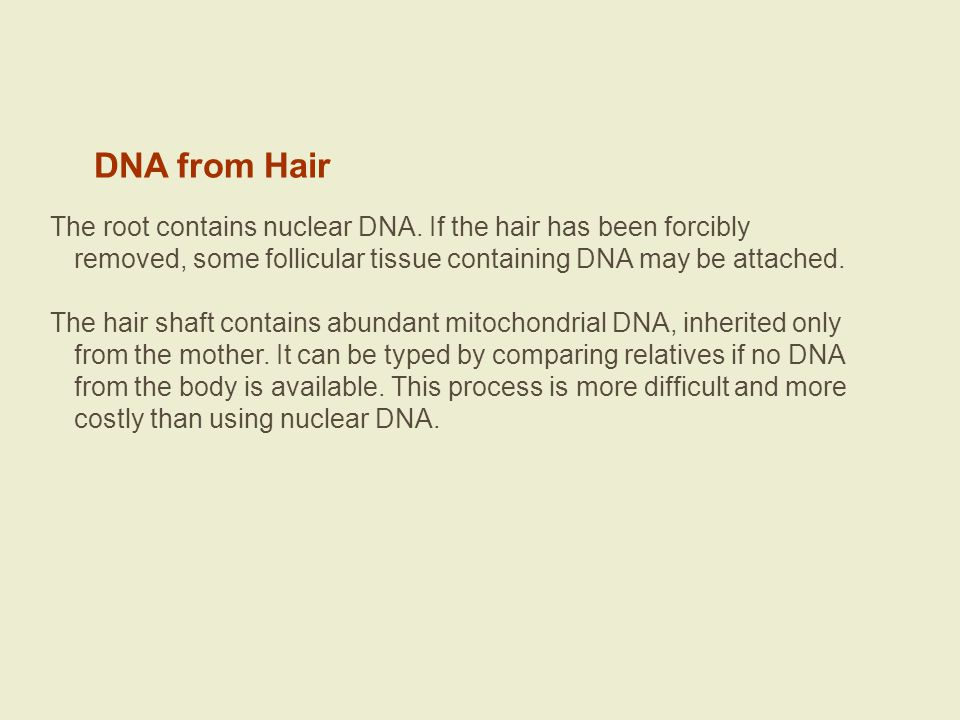 DNA from Hair The root contains nuclear DNA. If the hair has been forcibly removed, some follicular tissue containing DNA may be attached.