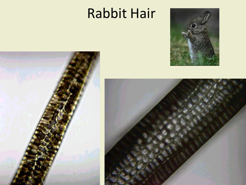 Rabbit Hair