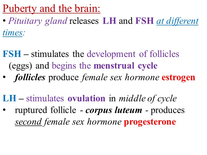 Puberty and the brain: Pituitary gland releases LH and FSH at different times: