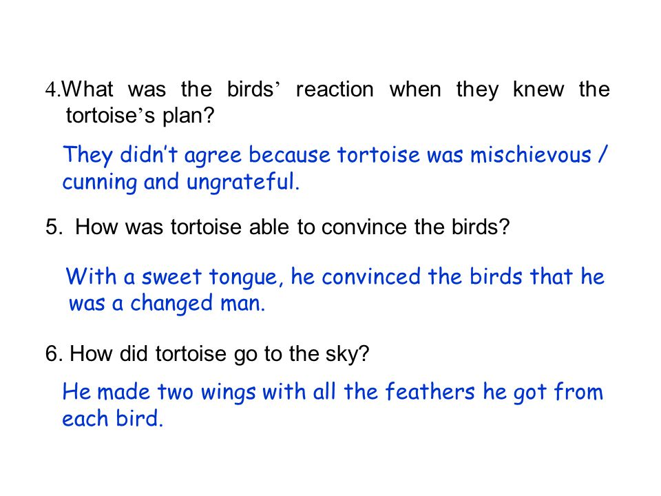 4.What was the birds' reaction when they knew the tortoise's plan