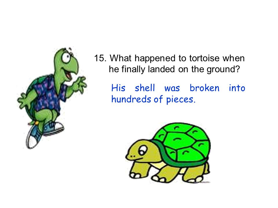 15. What happened to tortoise when he finally landed on the ground
