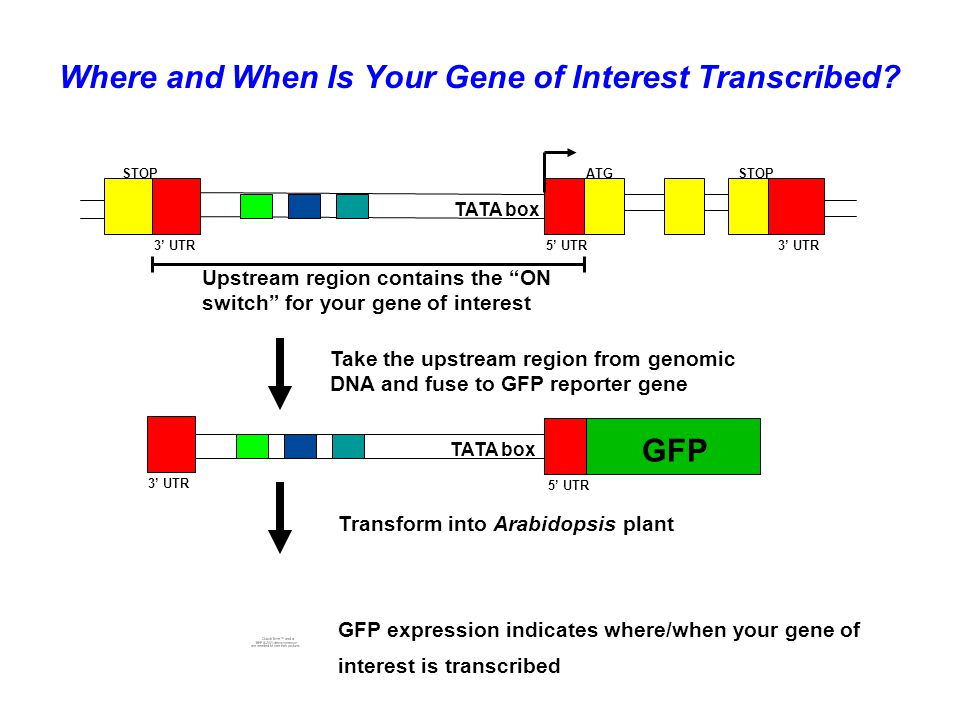 Where and When Is Your Gene of Interest Transcribed