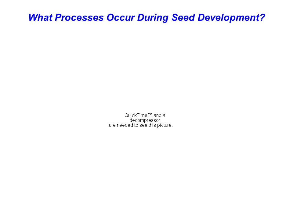 What Processes Occur During Seed Development