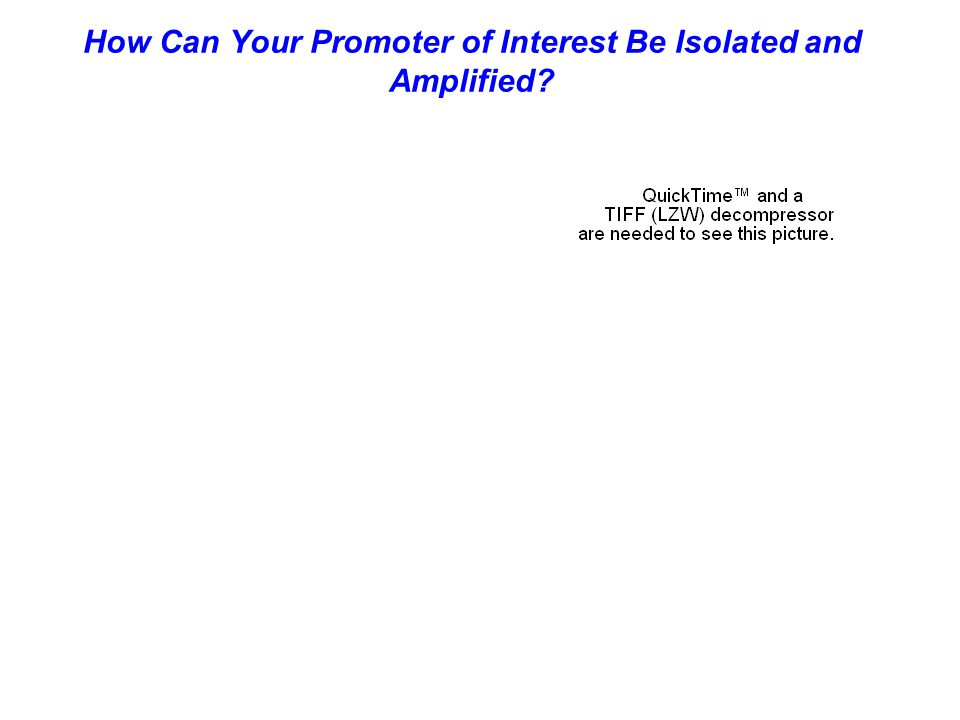 How Can Your Promoter of Interest Be Isolated and Amplified