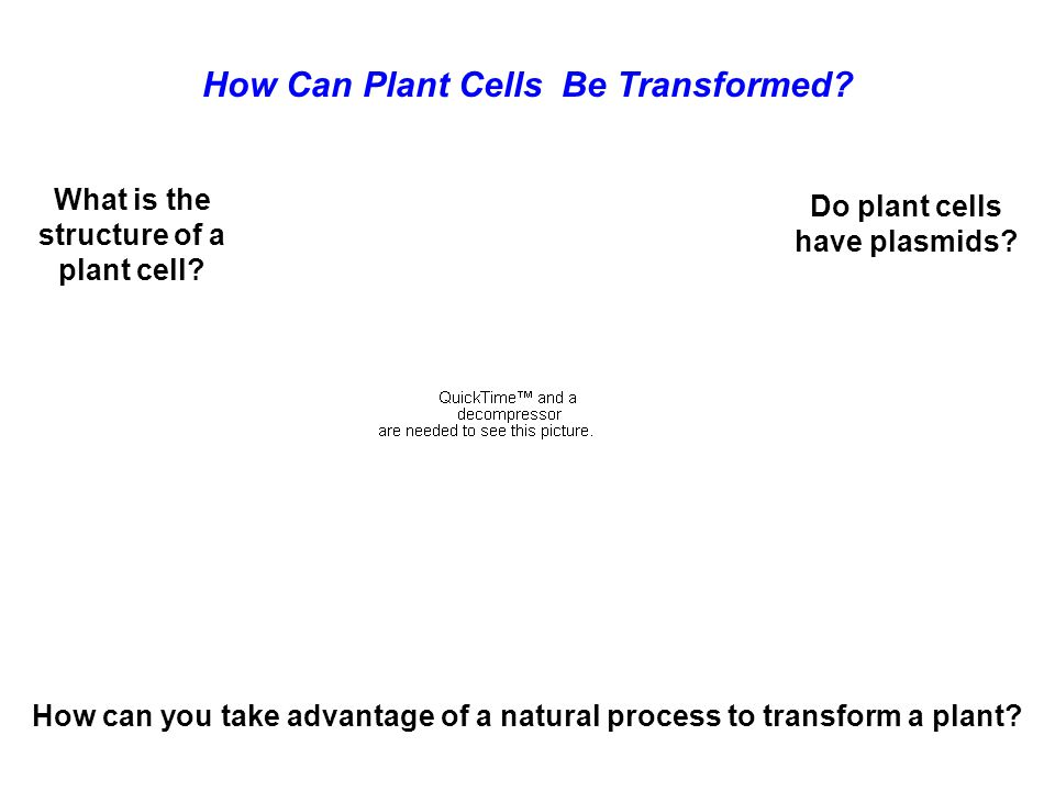 How Can Plant Cells Be Transformed