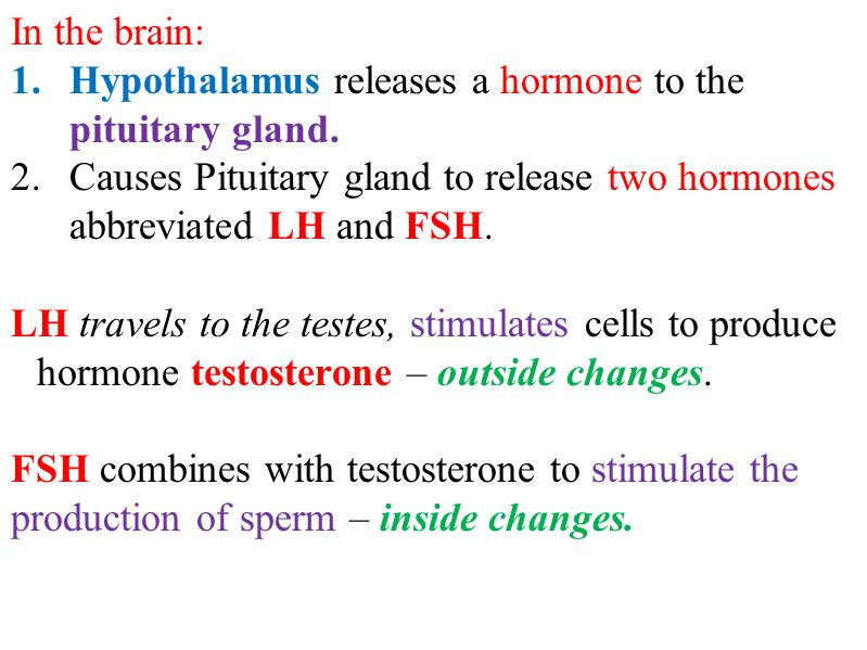In the brain: Hypothalamus releases a hormone to the pituitary gland. Causes Pituitary gland to release two hormones abbreviated LH and FSH.