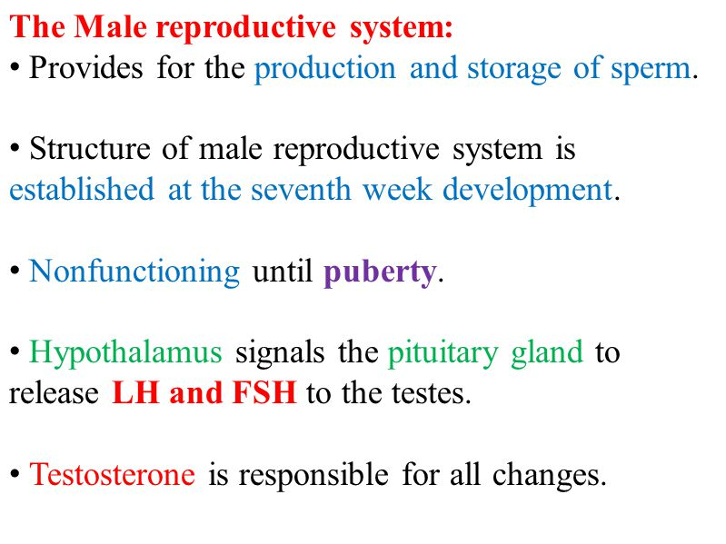 The Male reproductive system: