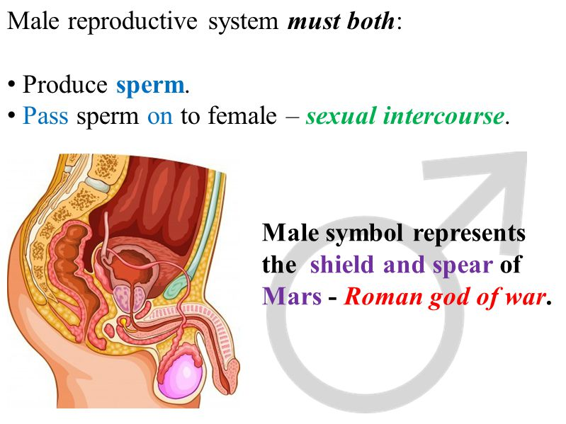 Male reproductive system must both: