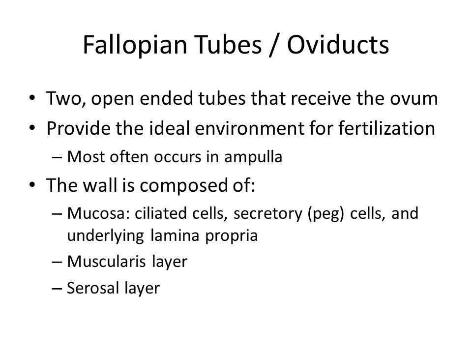 Fallopian Tubes / Oviducts