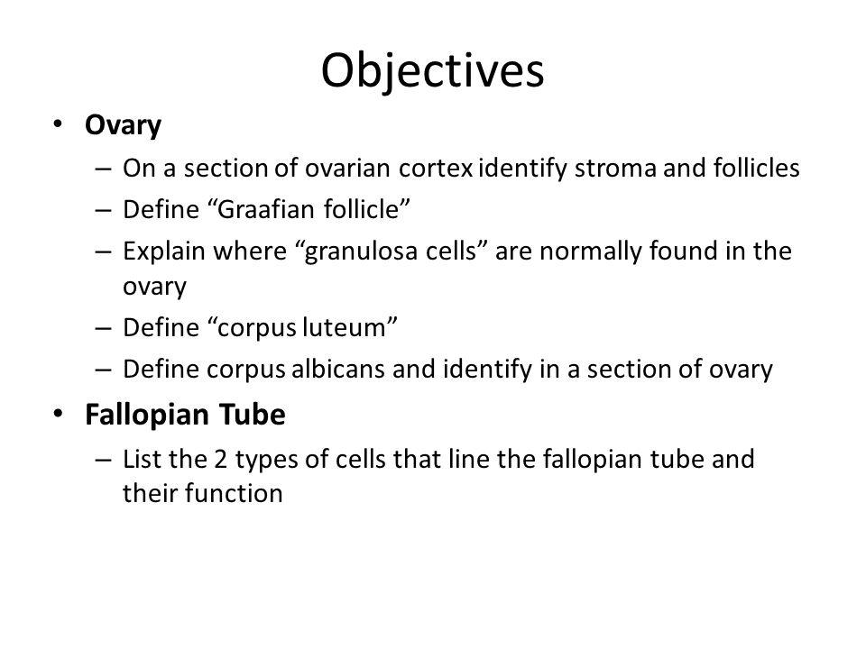 Objectives Fallopian Tube Ovary