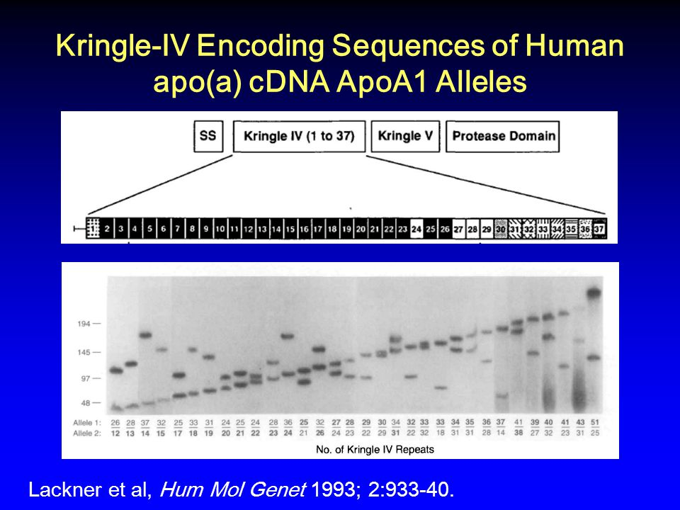 Kringle-IV Encoding Sequences of Human apo(a) cDNA ApoA1 Alleles