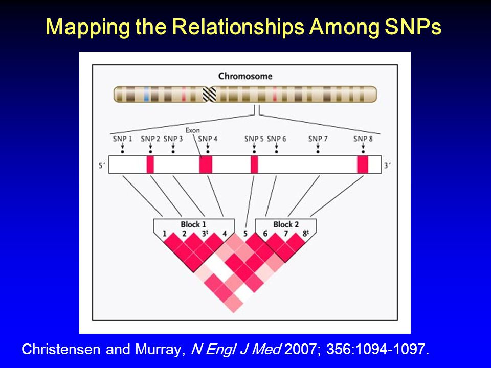 Mapping the Relationships Among SNPs