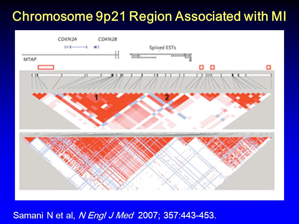 Chromosome 9p21 Region Associated with MI