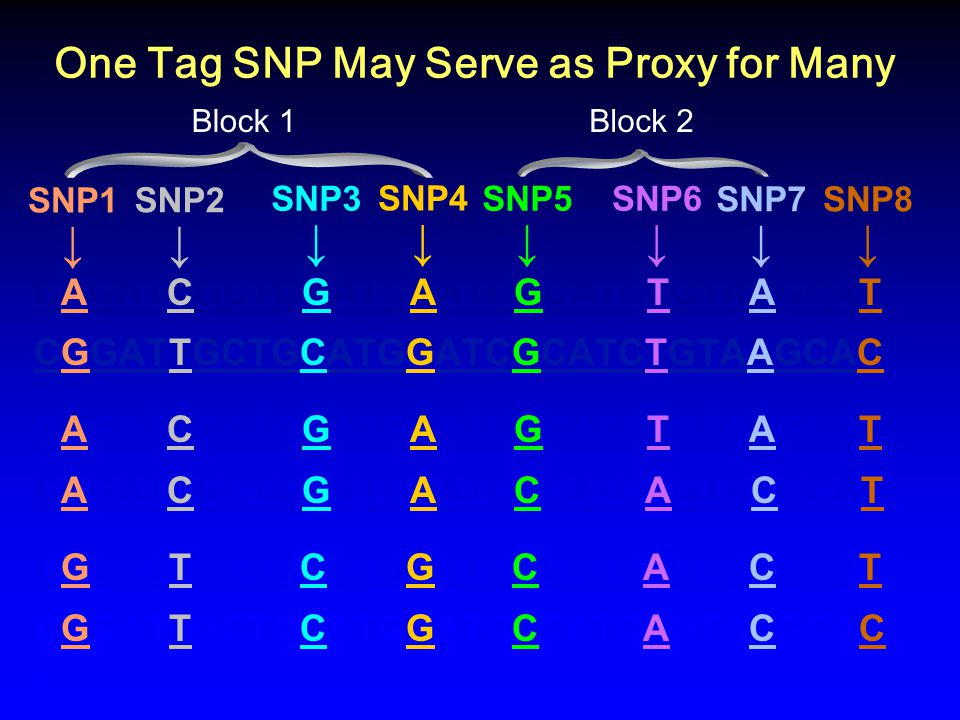 One Tag SNP May Serve as Proxy for Many