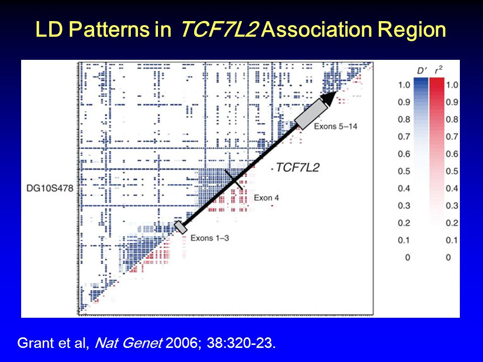 LD Patterns in TCF7L2 Association Region