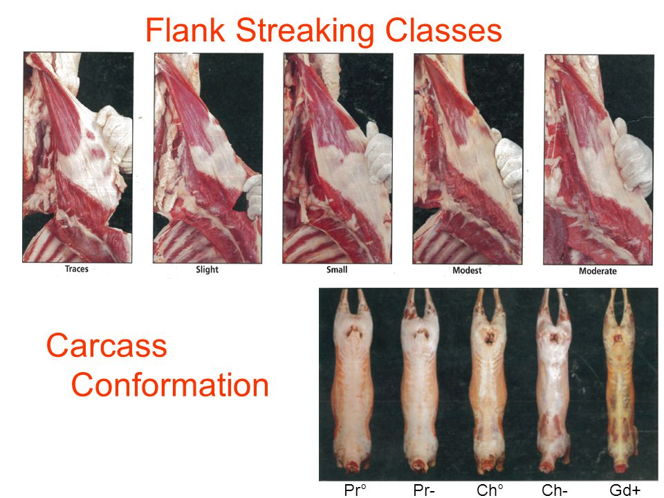 Flank Streaking Classes