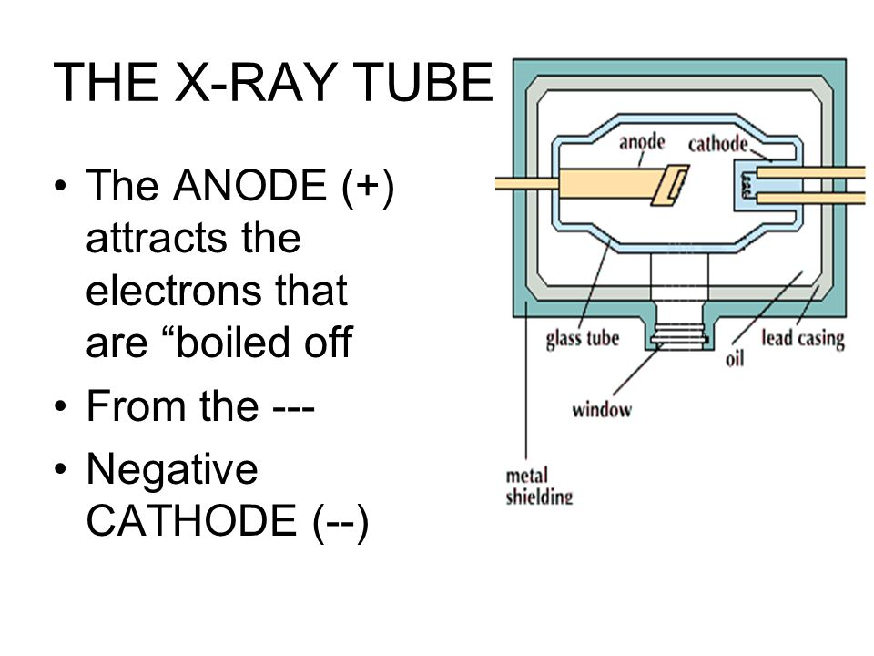 THE X-RAY TUBE The ANODE (+) attracts the electrons that are boiled off.