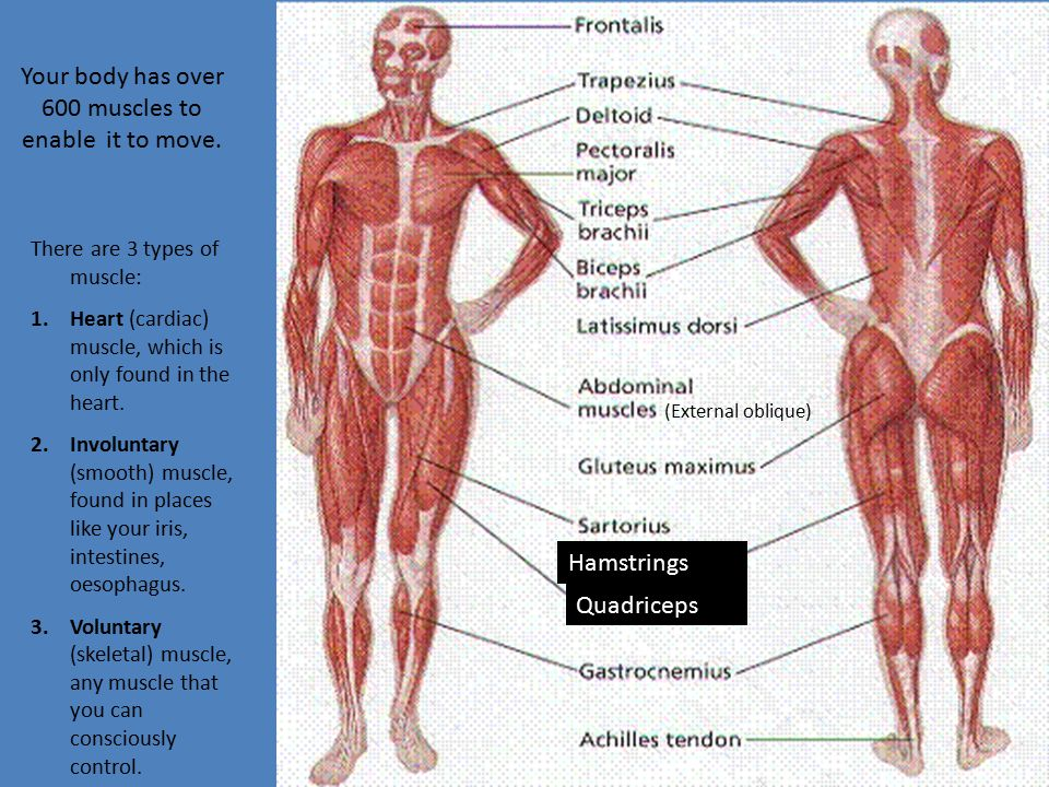Your body has over 600 muscles to enable it to move.