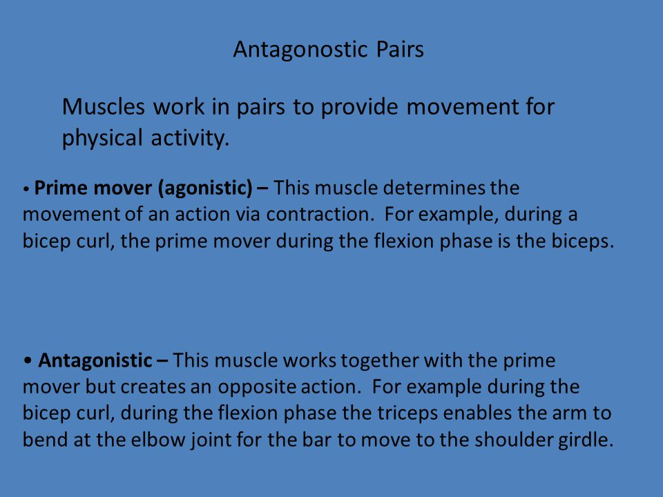 Muscles work in pairs to provide movement for physical activity.