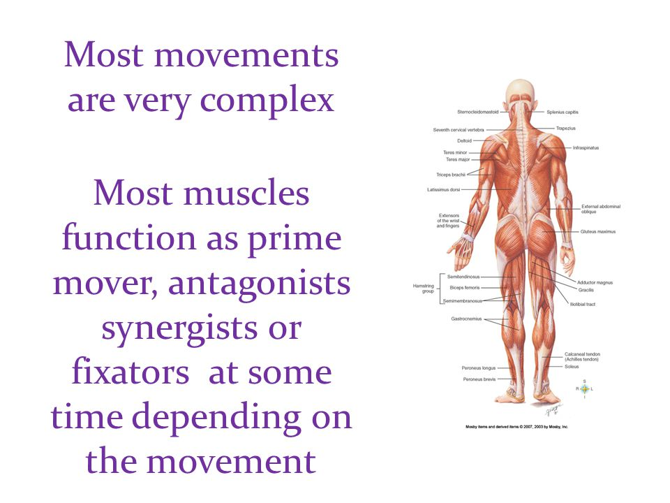 Most movements are very complex