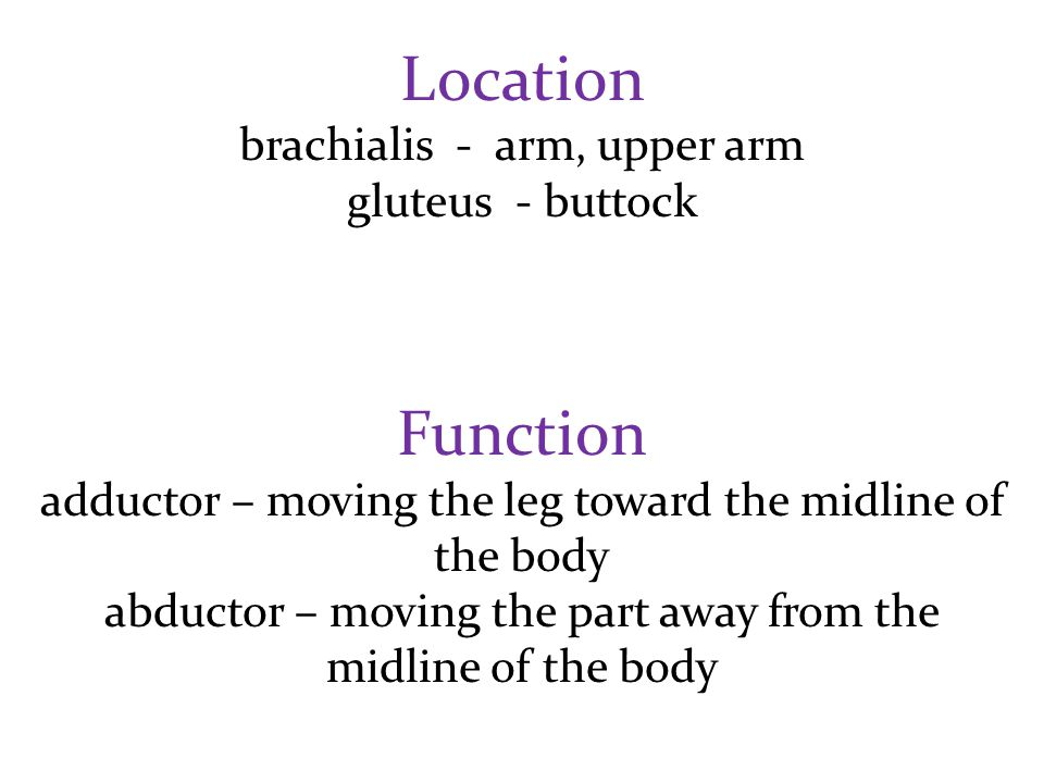 Location Function brachialis - arm, upper arm gluteus - buttock