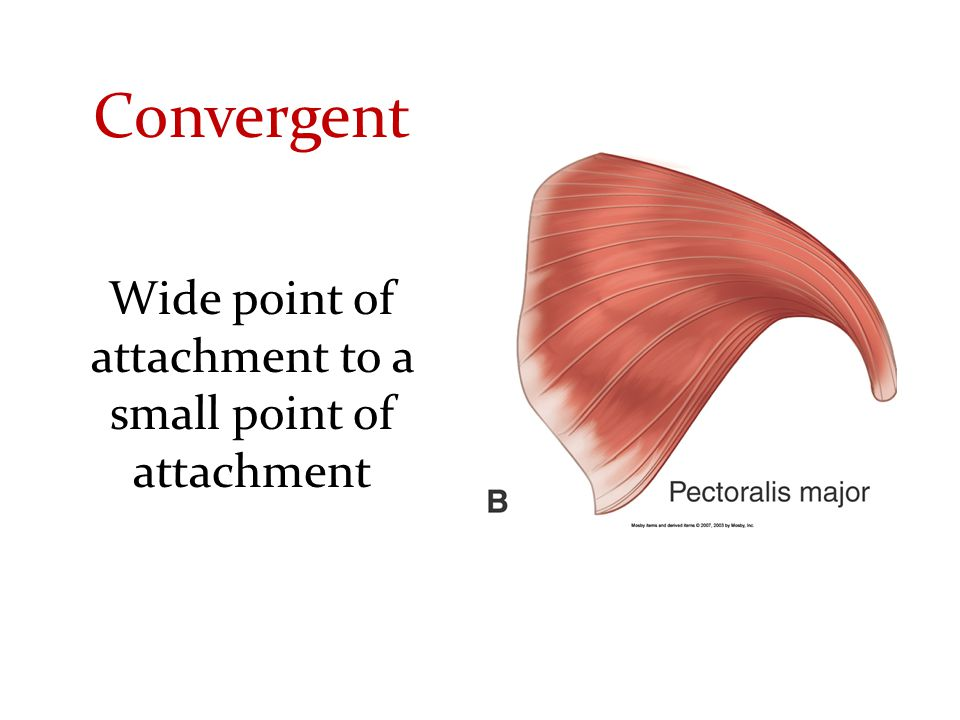 Wide point of attachment to a small point of attachment