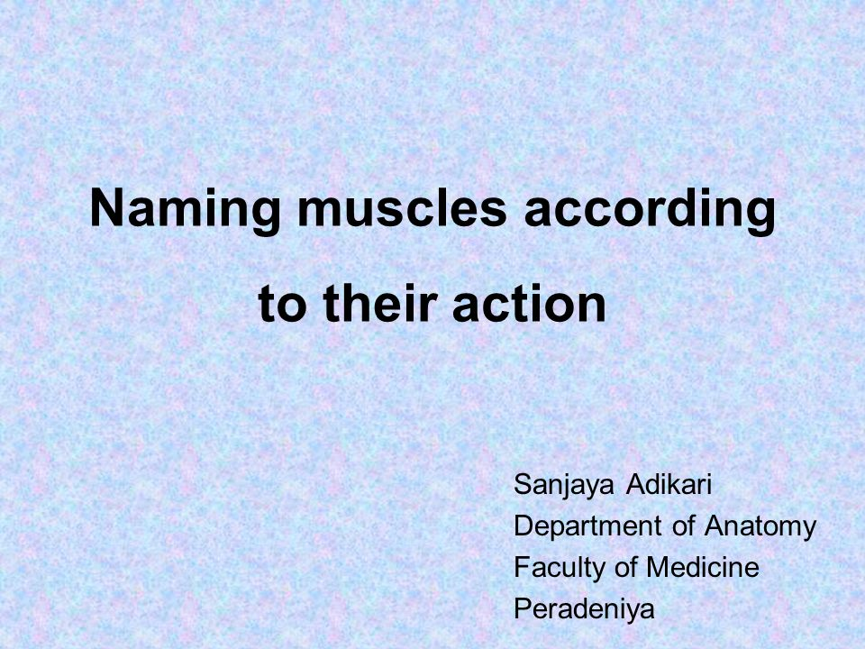 Naming muscles according to their action