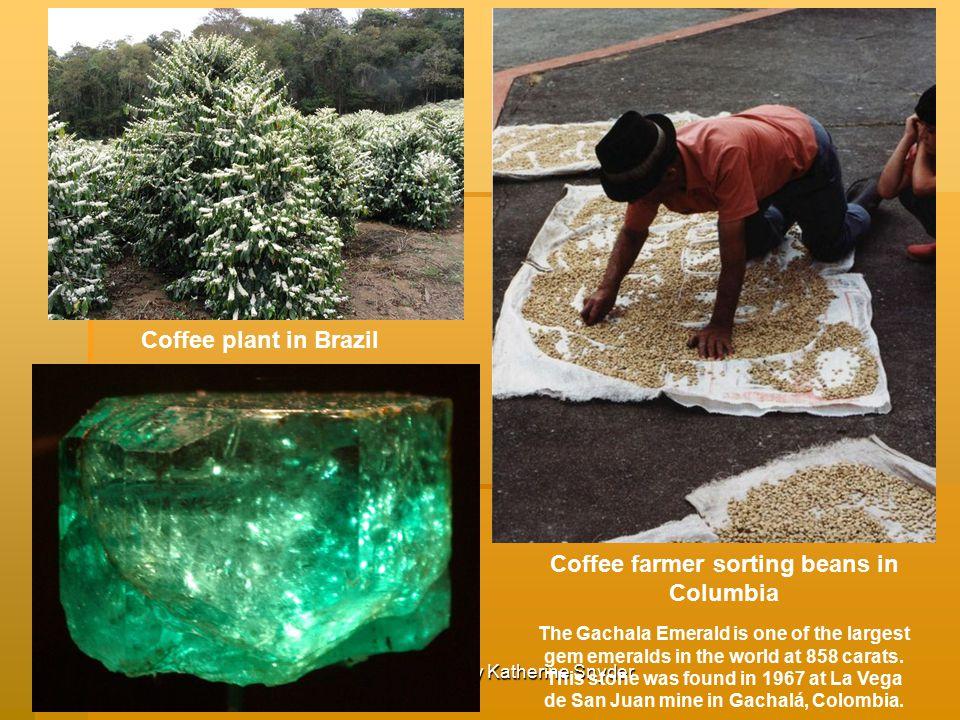 Coffee farmer sorting beans in Columbia