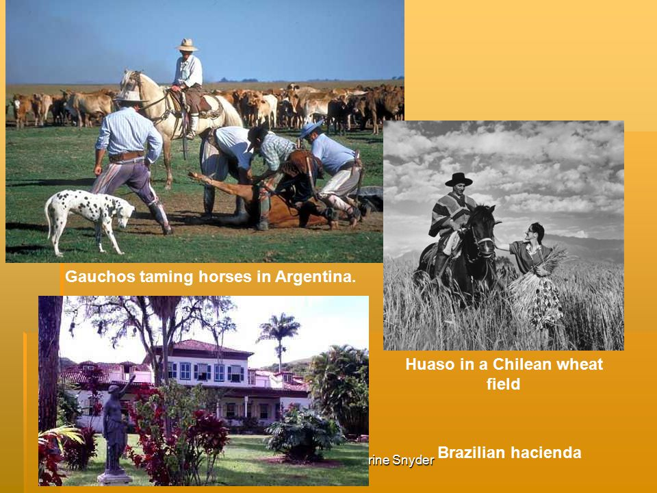 Gauchos taming horses in Argentina. Huaso in a Chilean wheat field