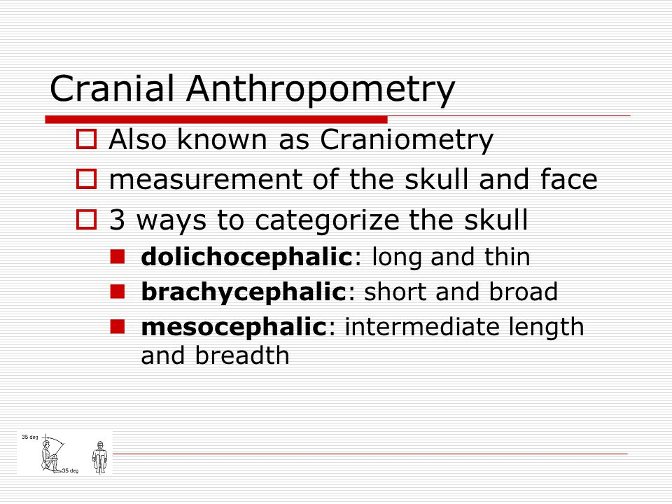 Cranial Anthropometry