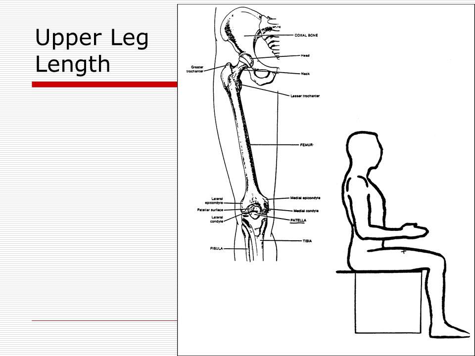 Upper Leg Length