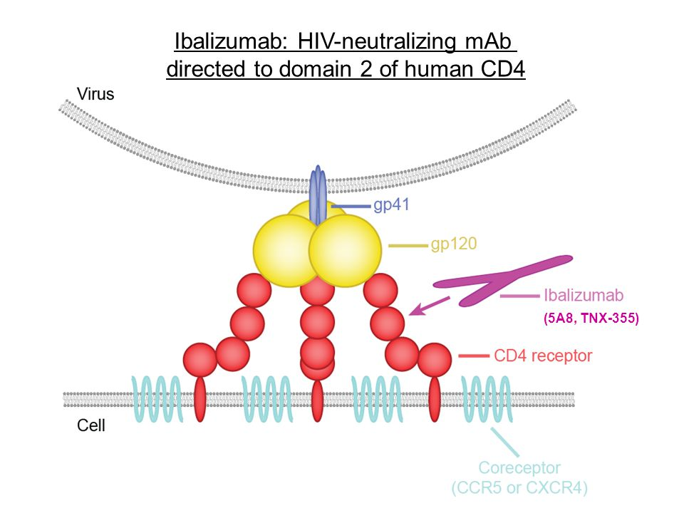 Ibalizumab: HIV-neutralizing mAb directed to domain 2 of human CD4