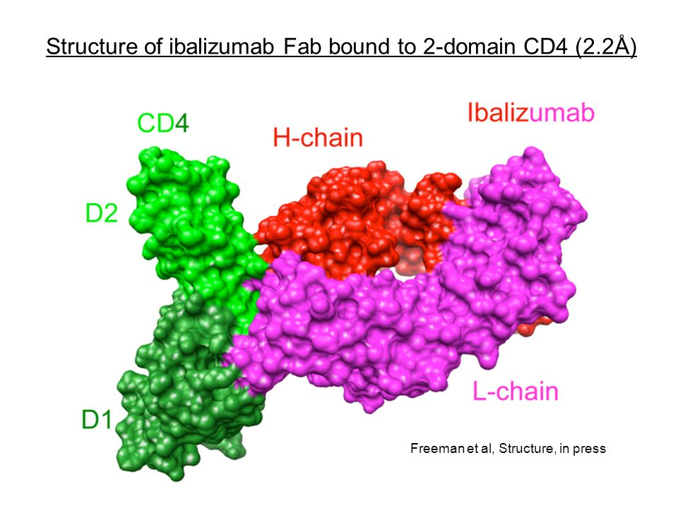 Structure of ibalizumab Fab bound to 2-domain CD4 (2.2Å)