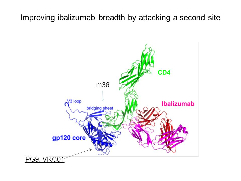 Improving ibalizumab breadth by attacking a second site