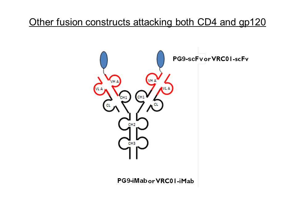 Other fusion constructs attacking both CD4 and gp120