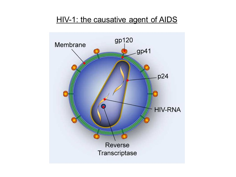 HIV-1: the causative agent of AIDS