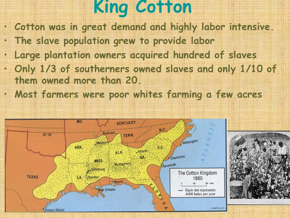 King Cotton Cotton was in great demand and highly labor intensive.