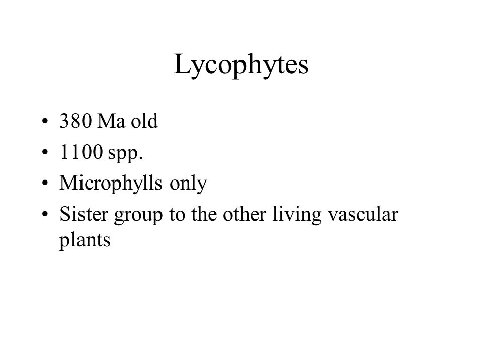 Lycophytes 380 Ma old 1100 spp. Microphylls only