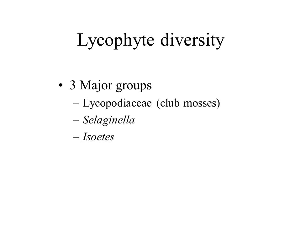 Lycophyte diversity 3 Major groups Lycopodiaceae (club mosses)