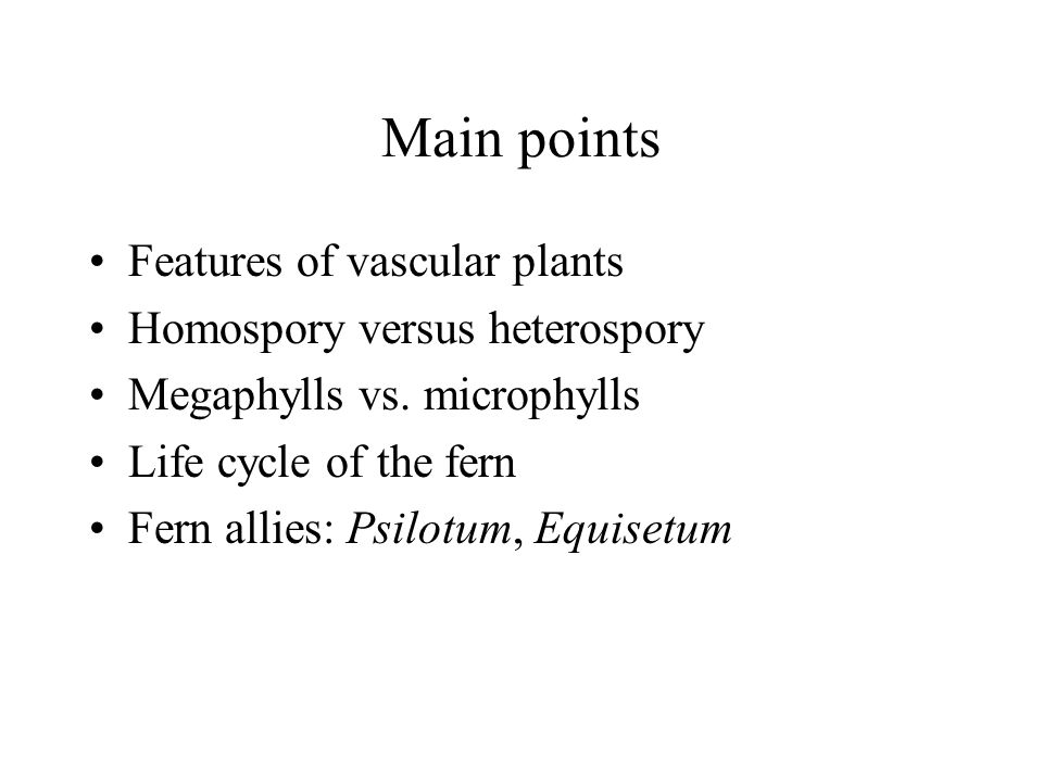 Main points Features of vascular plants Homospory versus heterospory
