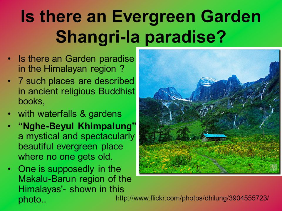 Is there an Evergreen Garden Shangri-la paradise