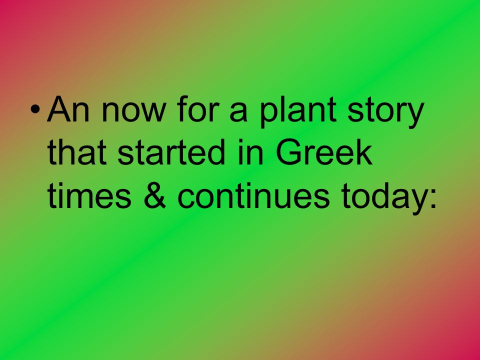 An now for a plant story that started in Greek times & continues today: