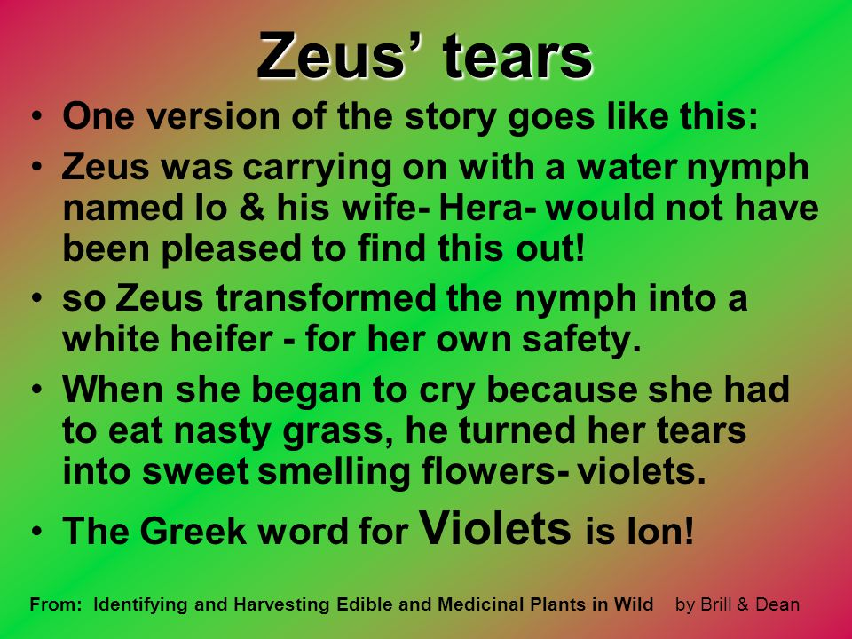 Zeus' tears One version of the story goes like this: