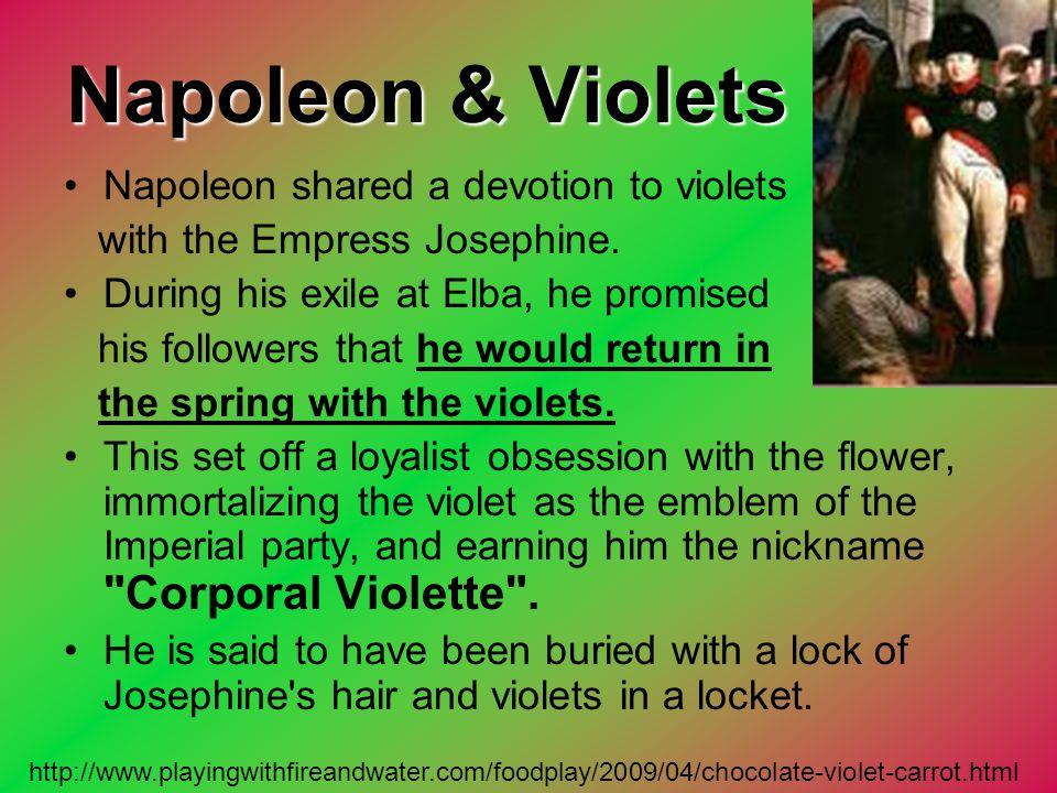 Napoleon & Violets Napoleon shared a devotion to violets