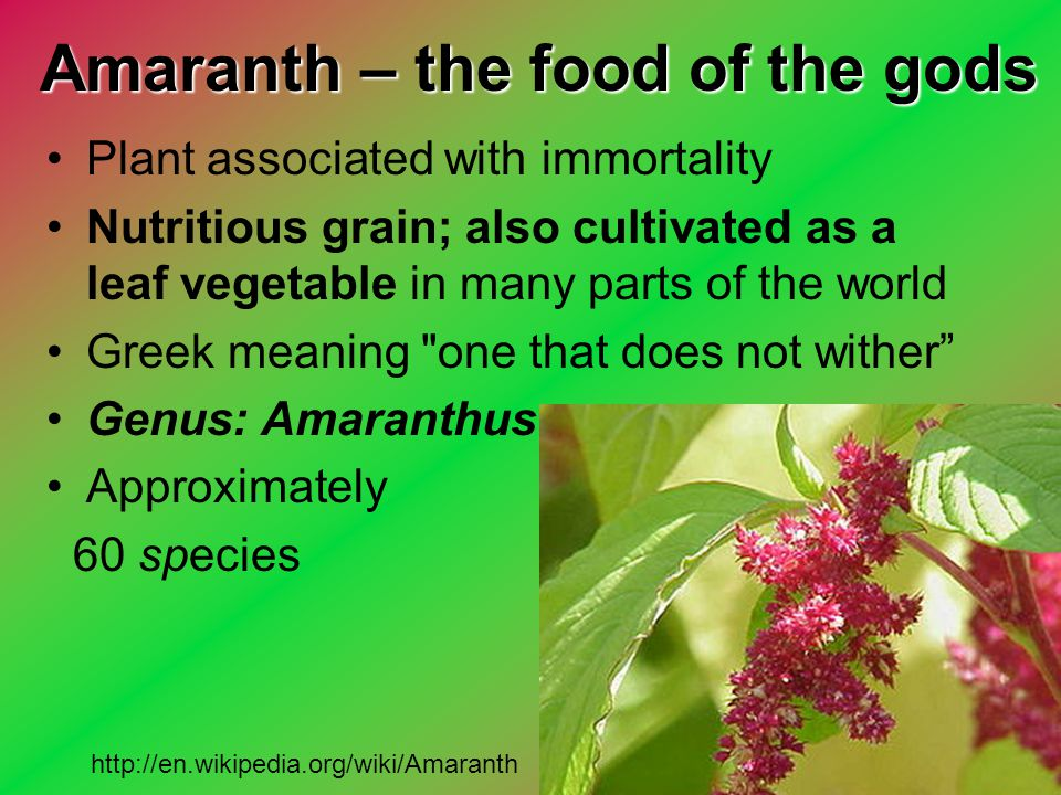 Amaranth – the food of the gods