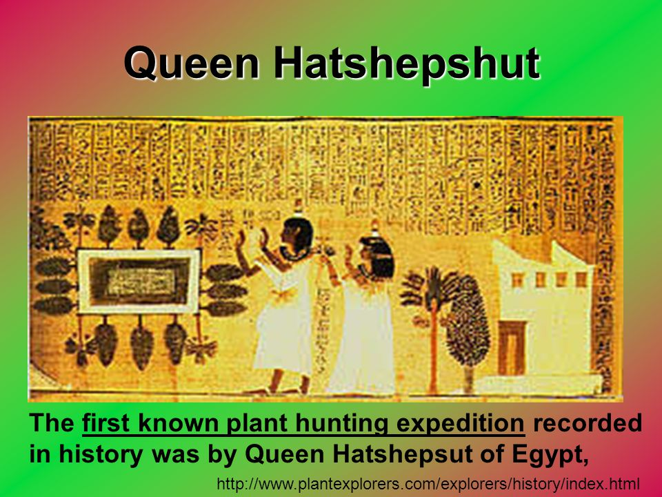 Queen Hatshepshut The first known plant hunting expedition recorded