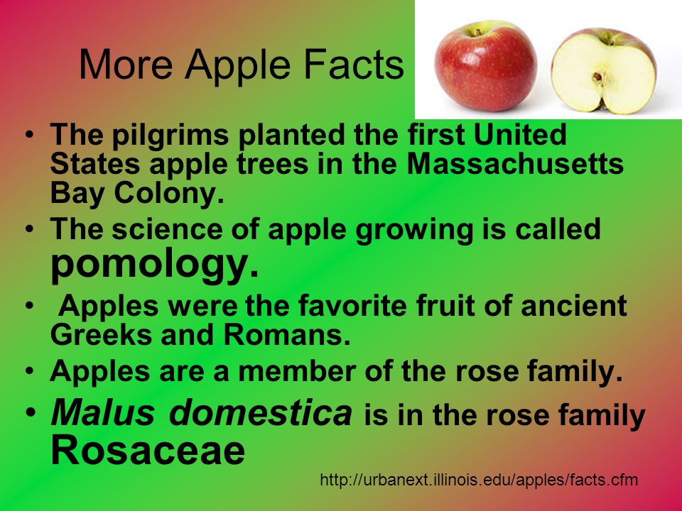 More Apple Facts Malus domestica is in the rose family Rosaceae