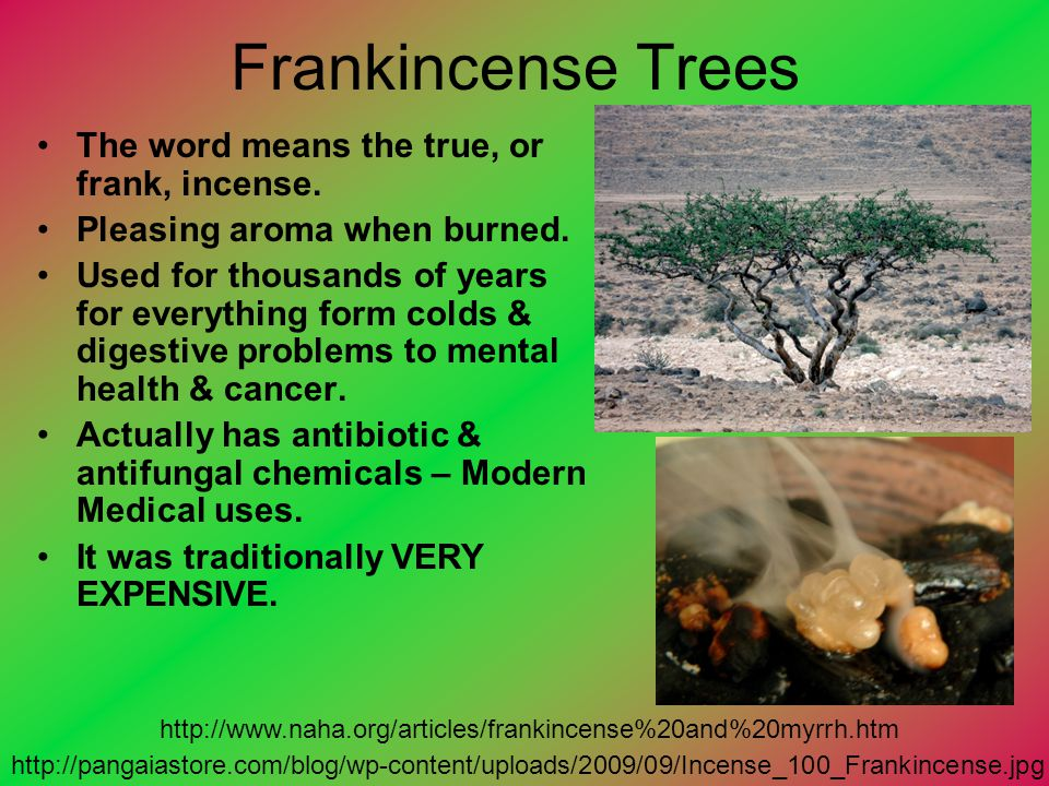 Frankincense Trees The word means the true, or frank, incense.