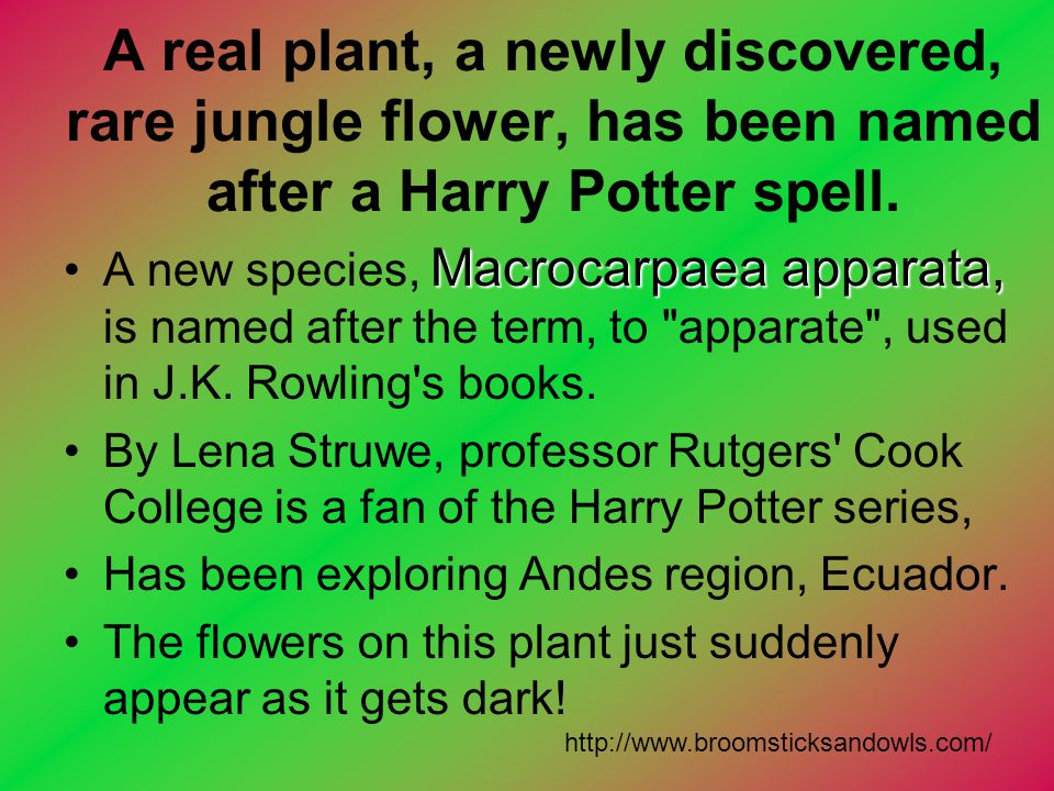 A real plant, a newly discovered, rare jungle flower, has been named after a Harry Potter spell.