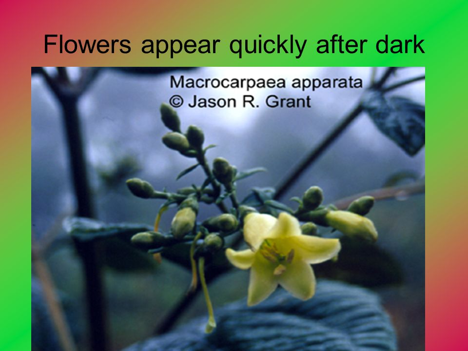 Flowers appear quickly after dark